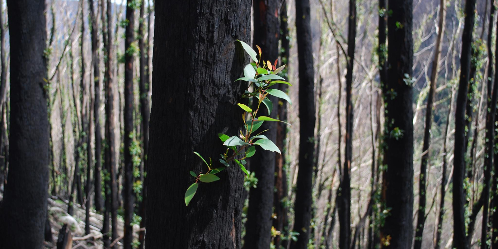 Funding Australia's bushfire response: Update